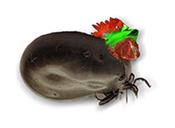 Elektronische Plüschtiere Preiswert Kaufen Reden Hamster Maus Haustier Weihnachten Puppe Elektrische Sprechen Sound Record Hamster Pädagogisches Plüsch Spielzeug Für Kinder Weihnachten Geschenk Reine WeißE